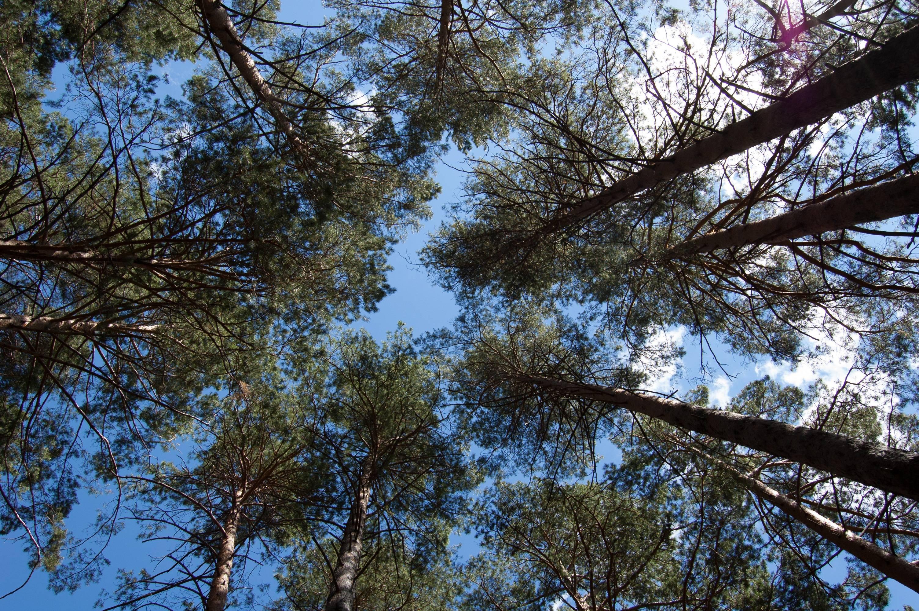 La superficie totale de la forêt Suédoise